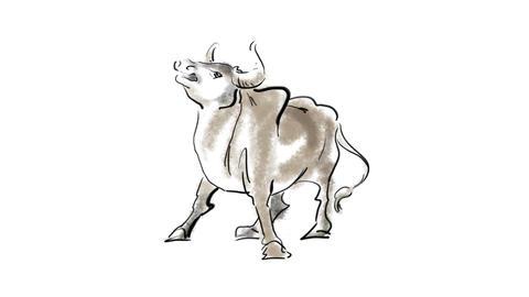 Zodiac Ox Stock Video Footage