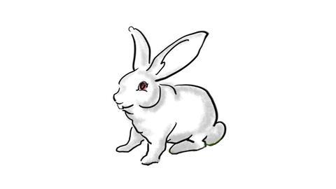Zodiac Rabbit Stock Video Footage