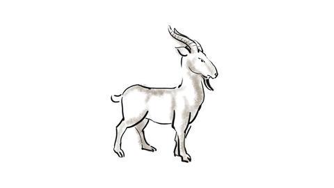 Zodiac Sheep Stock Video Footage
