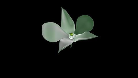 Flower Petal Opening Stock Video Footage