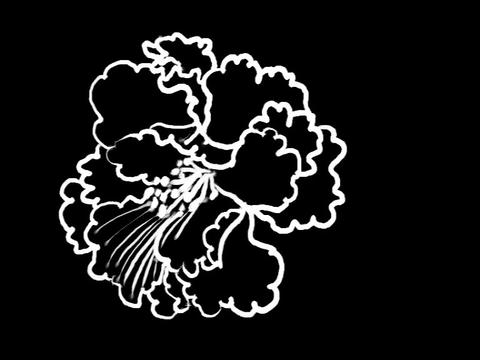 Poeny Flower Stock Video Footage
