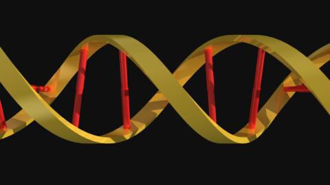 DNA 3D Model 3D Model