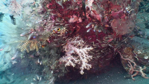 Corals Stock Video Footage