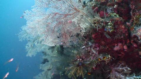 Corals Footage