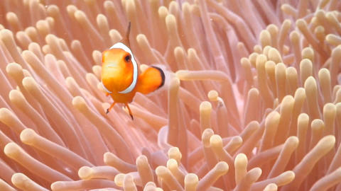 Fishes and Corals Stock Video Footage