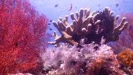 Fishes And Corals stock footage