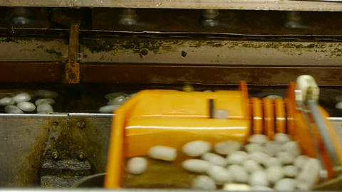 Silkworm cocoon at silk factory.Workers reeling at workshop Stock Video Footage