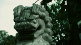 Stone lion,Historical monuments Footage