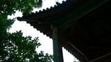 eaves silhouette & tree shadows Footage
