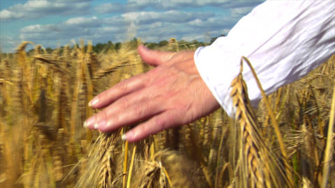 10709 womans hand brushing over wheat field Stock Video Footage
