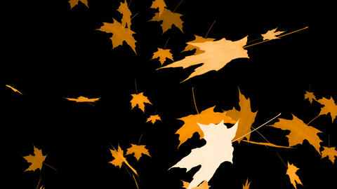 HD Loopable Falling Maple Animation with Alpha Channel Animation