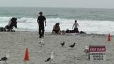 Beach In California 01 stock footage