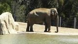 San Diego Zoo 17 elephant Footage