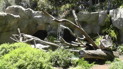 San Diego Zoo 42 sloth bear Stock Video Footage
