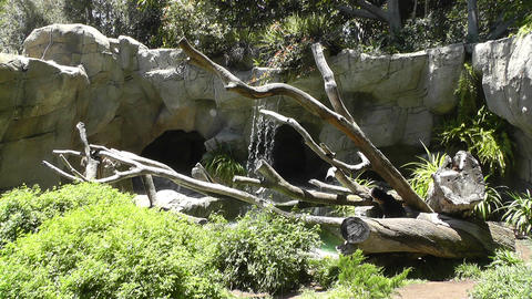 San Diego Zoo 42 sloth bear Stock Video Footage