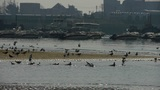 seagull taking a bath on sea,Yachts ship boat & Vessels docked at pier port Footage
