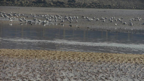 seagull habitat at beach Stock Video Footage
