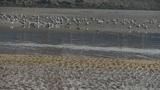 seagull habitat at beach Footage