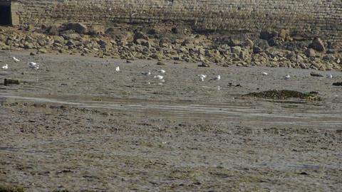 seagull habitat at beach Stock Video Footage