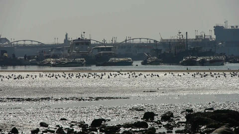 seagull habitat on sea,Yachts ship boat & Vessels... Stock Video Footage