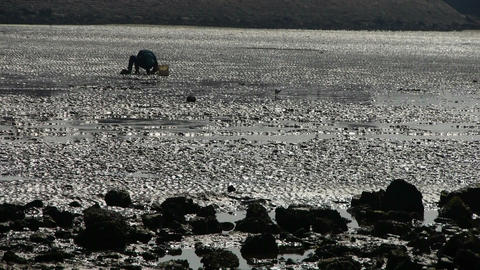 A dig clams fishermen on beach,ebb Stock Video Footage