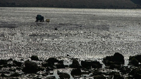 A dig clams fishermen on beach,ebb Footage