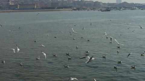 Many seagull flying in sea,reef,Seaside dams of QingDao city Stock Video Footage