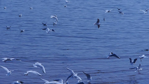 Many seagull flying in sea,beach Stock Video Footage