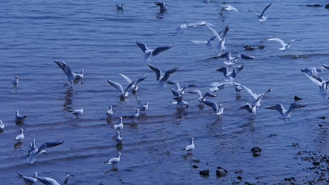 Many seagull flying in sea,beach Footage