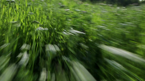 Fast run through the grass Footage