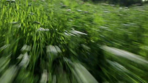 Fast run through the grass Stock Video Footage