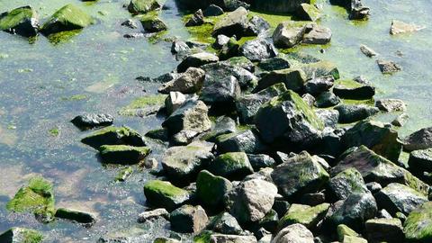 Ocean water surface and rock reef coastal,algae,seaweed,ebb,gravel,pollution Footage