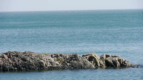 Ocean water surface and rock reef coastal,algae,seaweed,ebb,horizon,skyline Footage