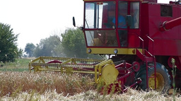 Combine harvesting ripe wheat Stock Video Footage