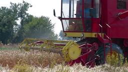 Combine harvesting ripe wheat Stock Video Footage
