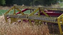 Ripe wheat harvest Stock Video Footage