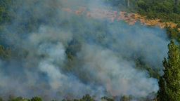 Mountain forest fire Stock Video Footage