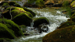 Clean fresh water of a forest stream running over mossy... Stock Video Footage