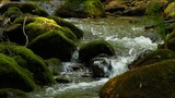 Clean fresh water of a forest stream running over mossy rocks Footage