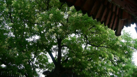 Chinese ancient building eaves under lush green... Stock Video Footage