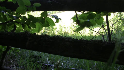 Fugitive who looks a vast meadow behind a wooden fence from edge of the forest 5 Footage