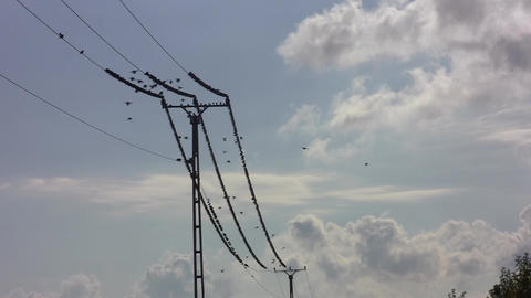 Hundreds of starlings flying or sitting on the heels of a pillar 03b Footage