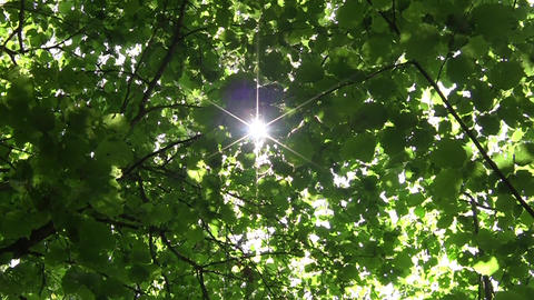 Looking towards the sun that shines through the leaves 61 Footage