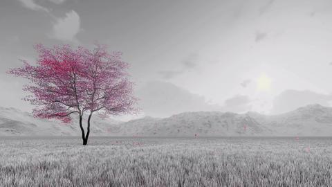 Sakura cherry tree in bloom slow-motion Animation