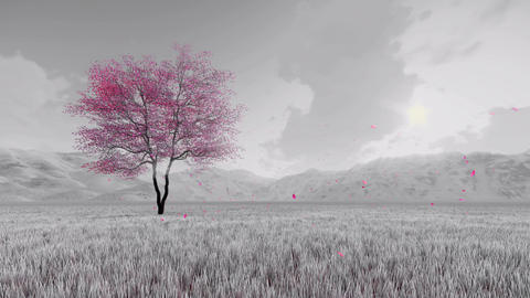 Fantasy sakura cherry tree in bloom slow motion Animation