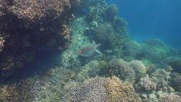 Sea turtle under water Footage