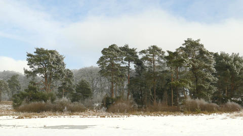 Frozen trees in winter landscape at the forest of National Park Live Action