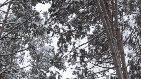 frozen little river in snow Footage