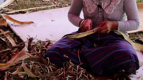Bhutan women debarking branches for papermaking Footage