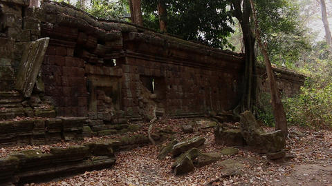 Cambodia Angkor Wat temple tree roots ruins leafs falling Footage